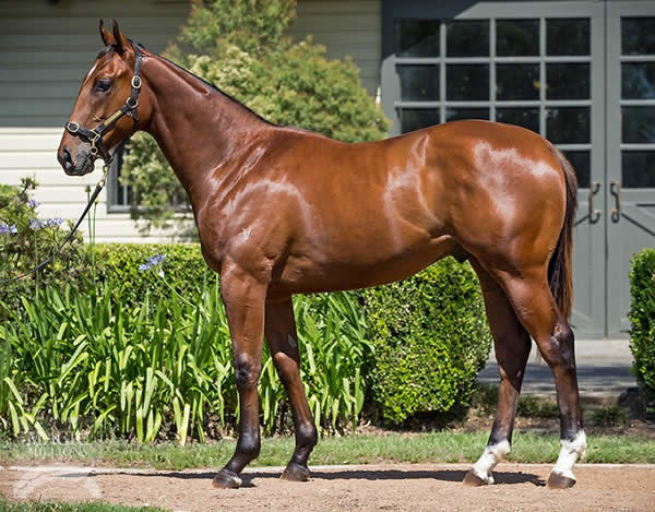 Outrageous was a $460,000 Magic Millions Yearling