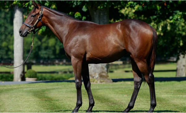 Philomene as a yearling that topped 2019 Arqana Deauville August.