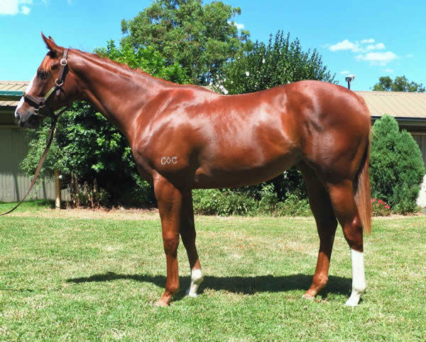 Pippie was a $60,000 Inglis Classic Yearling