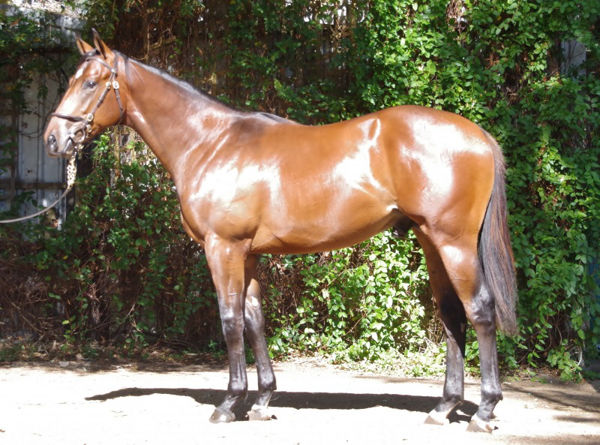 Portland Sky an $85,000 Magic Millions Perth yearling
