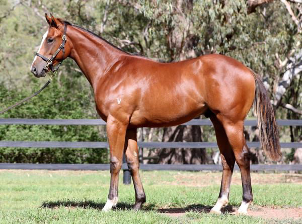 Predetermined as a yearling