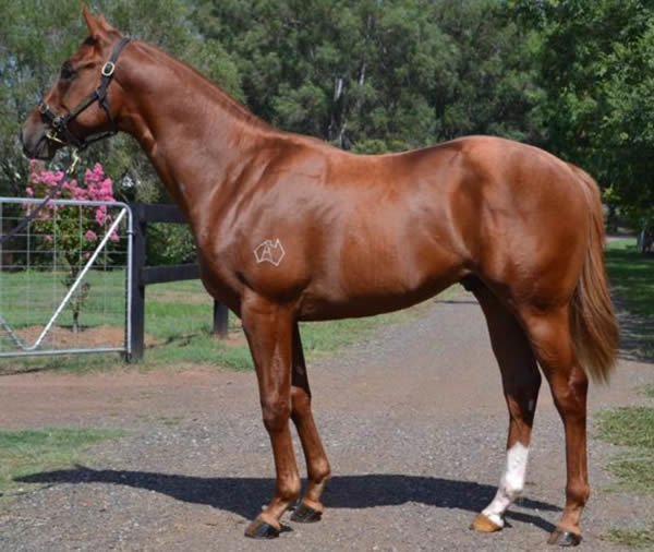 Prime Star as a yearling