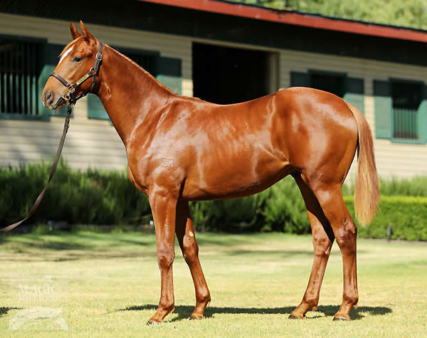 Primitivo as a yearling
