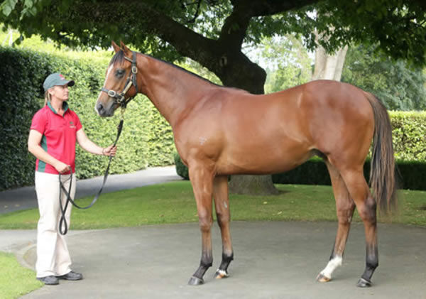 Purple Sector was bought by Duncan Ramage of DGR Thoroughbreds as a yearling.