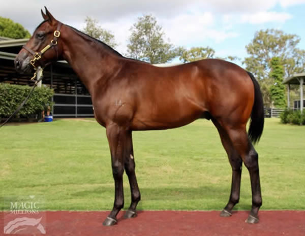 Quiet Riot as a yearling