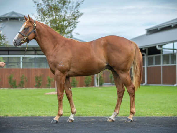 Real Gone Kid was passed in at Inglis Easter and sent to South Africa.