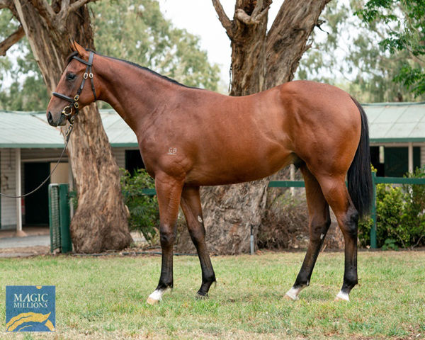 $1.1million Redoute's Choice colt sold by Bhima Thoroughbreds