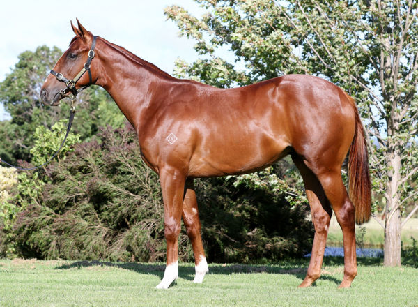 River Views failed to make his $150,000 reserve at the Inglis Premier Yearling sale