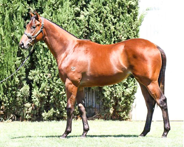 Scales Of Justice as a yearling