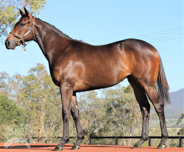 Seduction Queen was an $80,000 Gold Coast Yearling