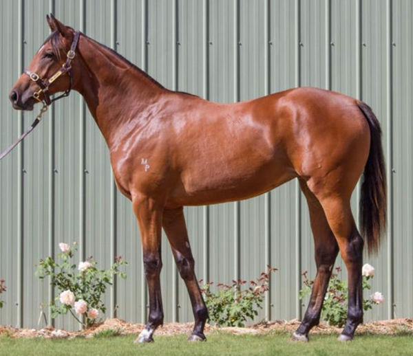 Sirileo Miss as a yearling.