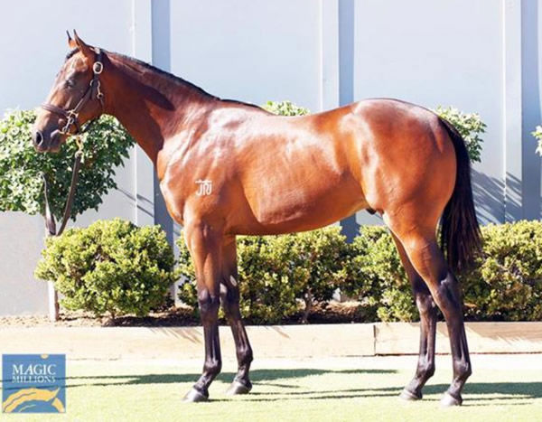 Starman provided a great sale ring result for Bowness Stud's John North and his family.