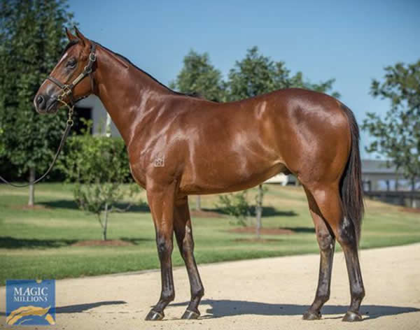 Stay Inside a $200,000 Magic Millions Yearling