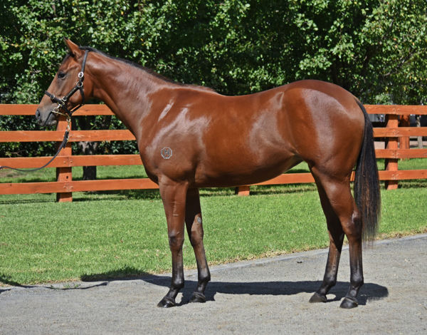 Supreme Idea was a $500,000 Easter Yearling