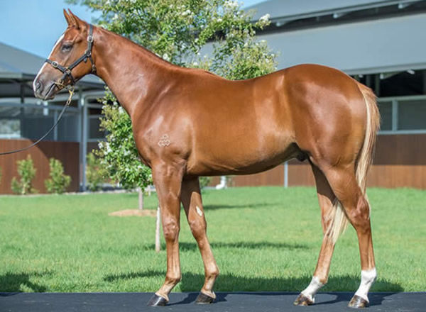 Tempel One as a yearling