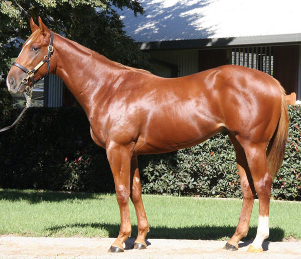 The Bopper was a $30,000 Scone Yearling
