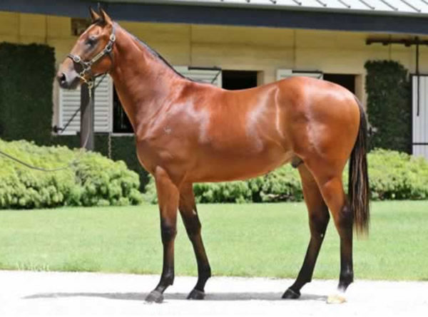 Token Spirit was the most expensive yearling for his sire Wandjna sold in 2019.