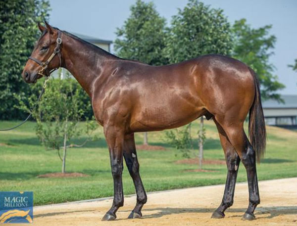 A $425,000 Magic Millions purchase, Tonneofgrit is the most expensive yearling so far by Winning Rupert.
