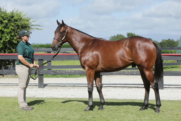 Toscanini as a yearling