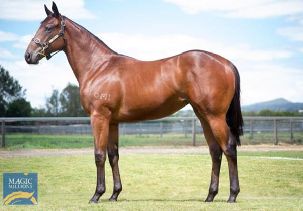 Vandoula Lass as a yearling