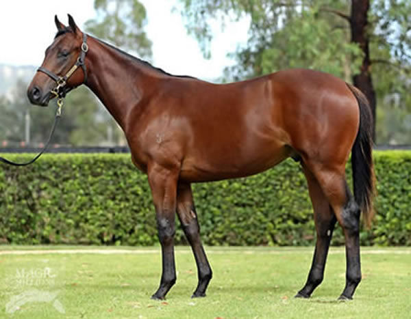 Whypeeo was a $200,000 Magic Millions yearling sold by Yarraman Park.