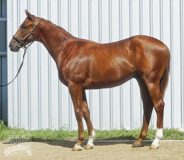Wisdom Of Water was a $70,000 MM Yearling