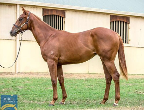 $160,000 MM Extreme Choice filly from Peace Time (USA)