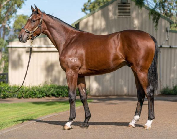 Yaletown was a $320,000 Inglis Easter purchase