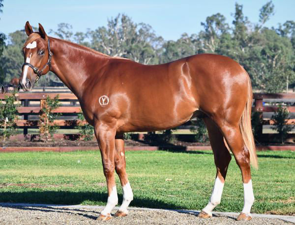 Yangtze Rapids passed-in short of his $300,000 reserve at Inglis Easter