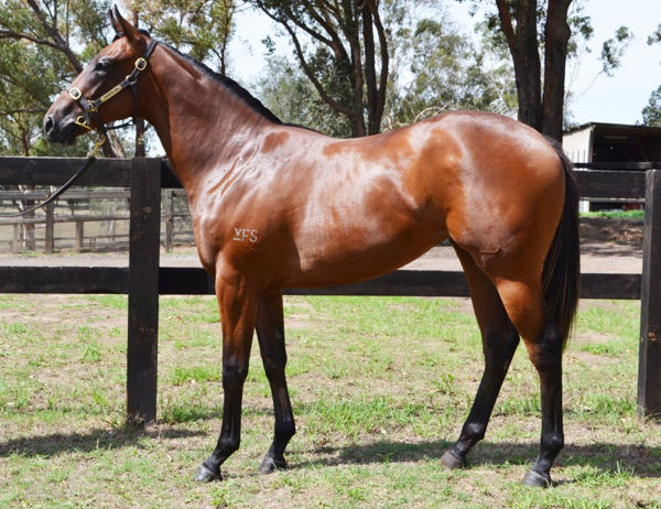 Your Song half sister to Spokeman heading to the Inglis Classic